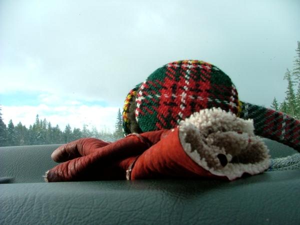 gloves and tartan earmuffs