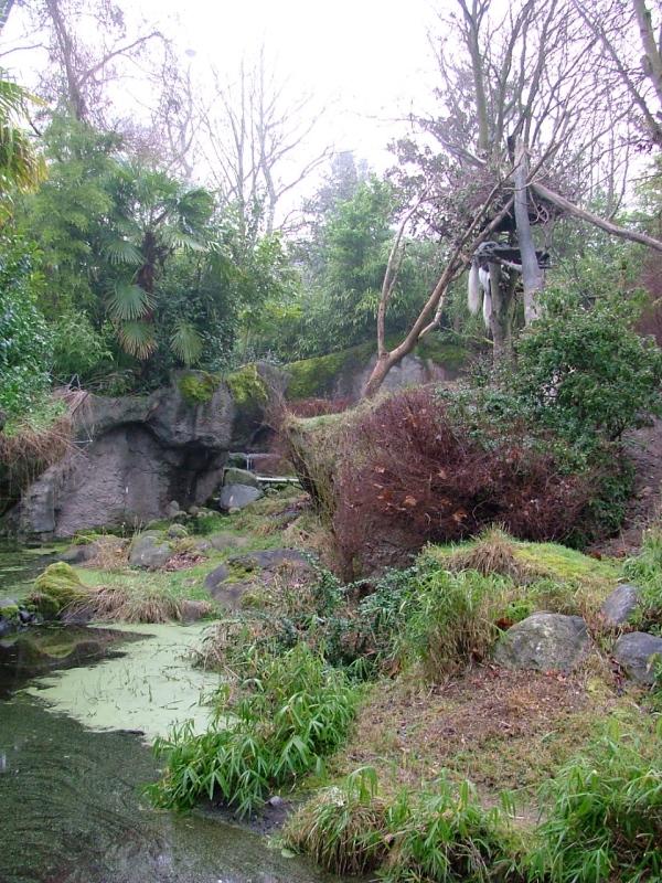woodland park zoo colobus monkey