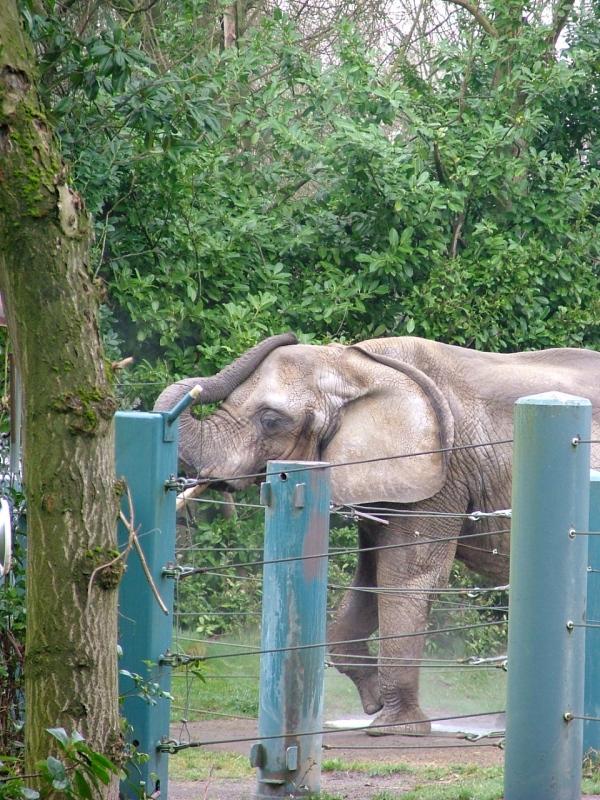 woodland park zoo elephant