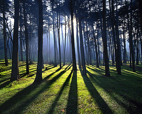 forests and light