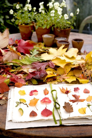 leaf collecting