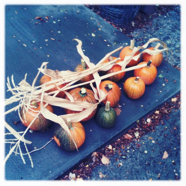 autumn pumpkin harvest