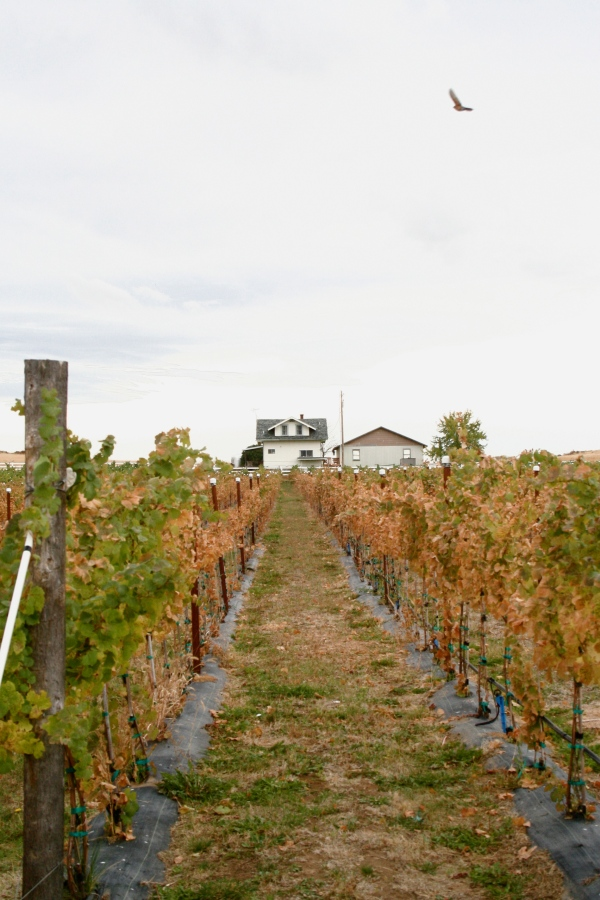 Naches Heights Vineyards