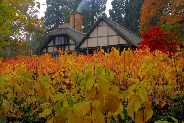 English Cottage in Autumn