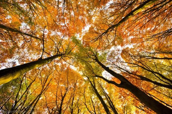 autumn peak district alex hyde