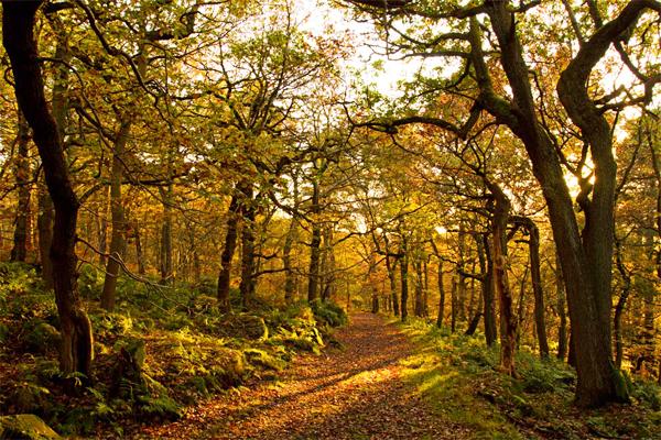 peak district robert mackin autumn