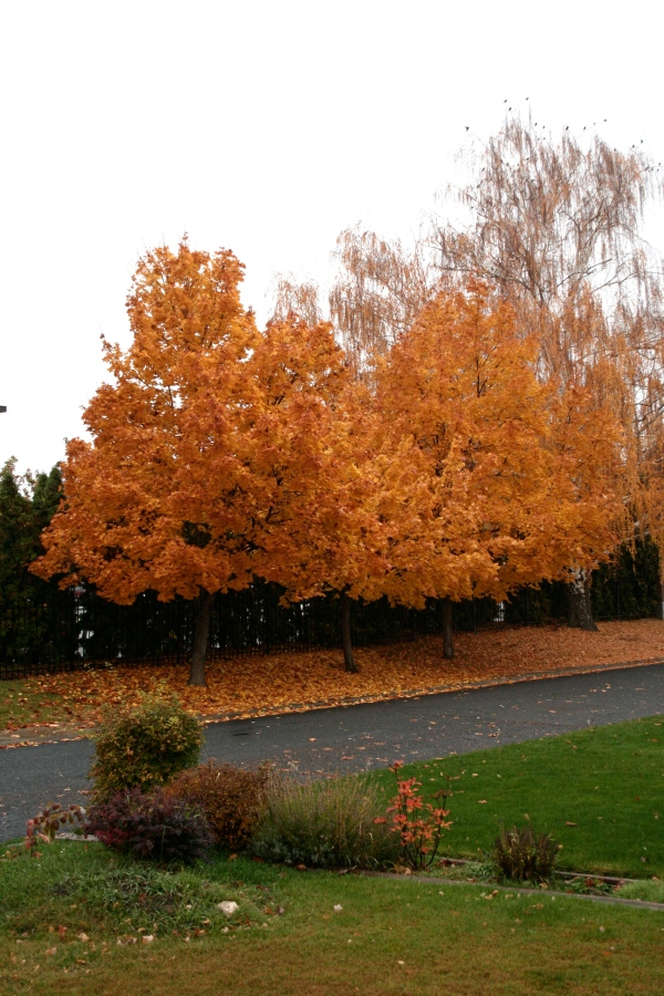 autumn in yakima wa