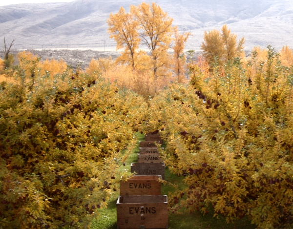 fall fruit trees in the yakima valley