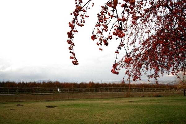 autumn trees and orchards yakima, wa