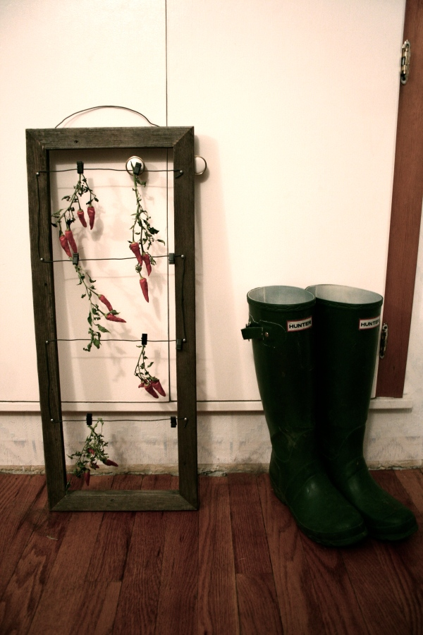 drying chili peppers on a picture frame