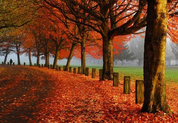 Vancouver B.C. in autumn
