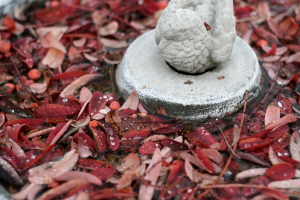 fall leaves in birdbath