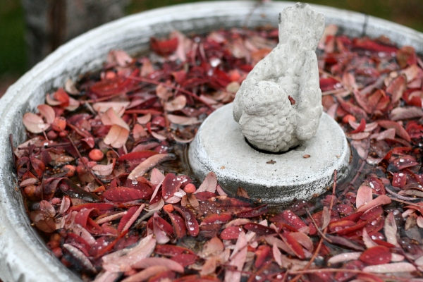 autumn leaves in birdbath