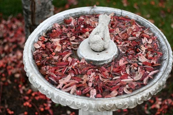 leaves in frozen birdbath