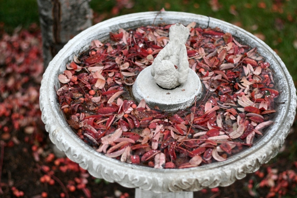 leaves in frozen birdbath