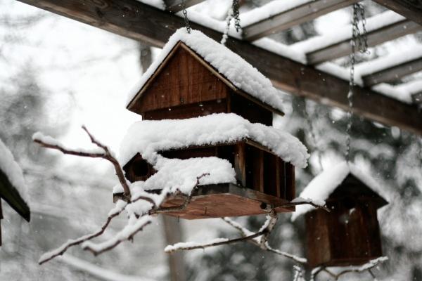 birdhouse winter
