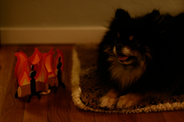 pomeranian by the fireplace