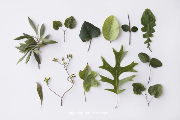 Miles of Light Herbariums