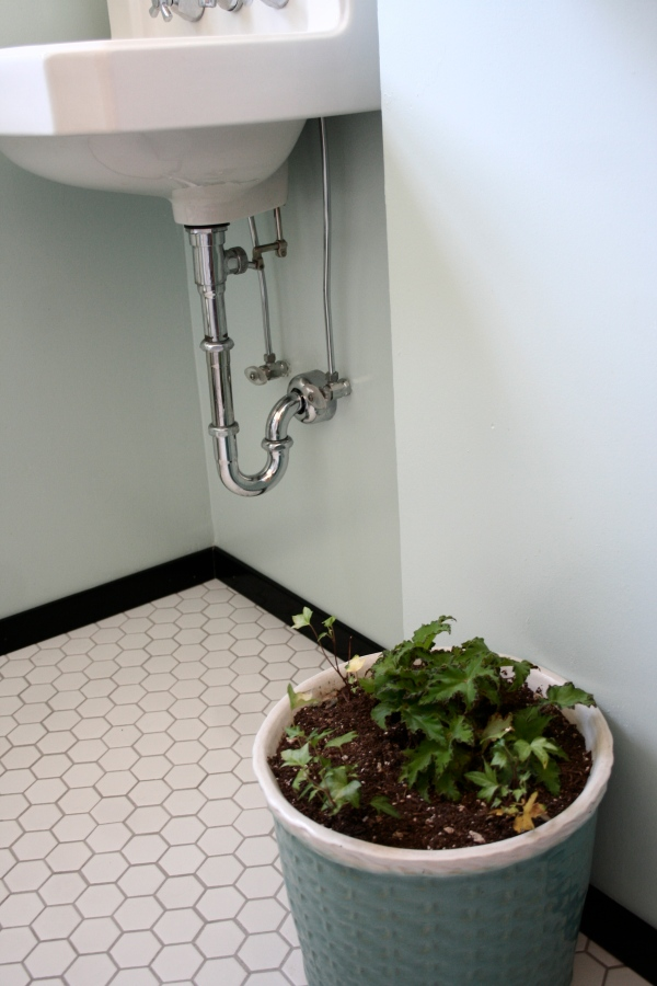 plant in the bathroom after